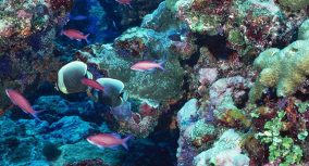 Coral Reef Essay: Descriptive Writing How-to Guide