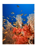 problems for the corals essay Problems flag this paper all  reefs are mainly composed of calcium carbonate from living and dead corals (1)  coral reef bleaching is the loss of.