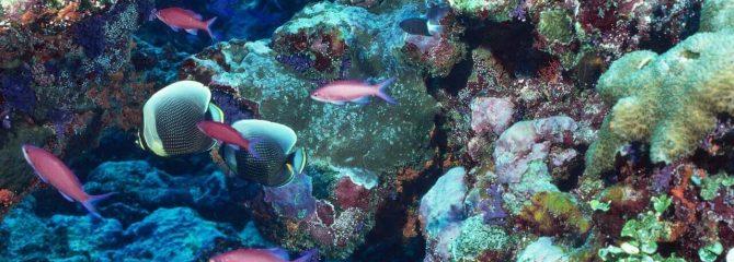 coral reef essay  descriptive writing how