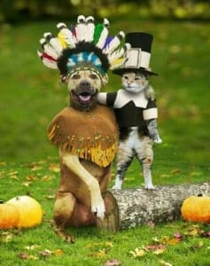 dog and cat in halloween costumes, picture for the contest