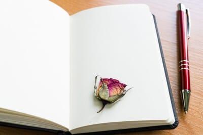 Essay for You